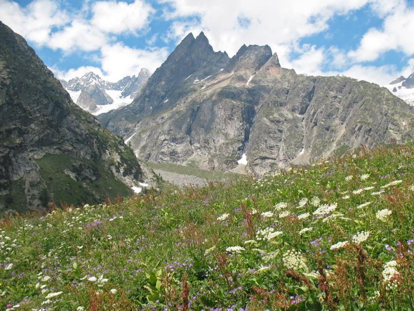 Les fleurs sauvages dans les montagnes